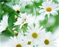 Цветочки-c7